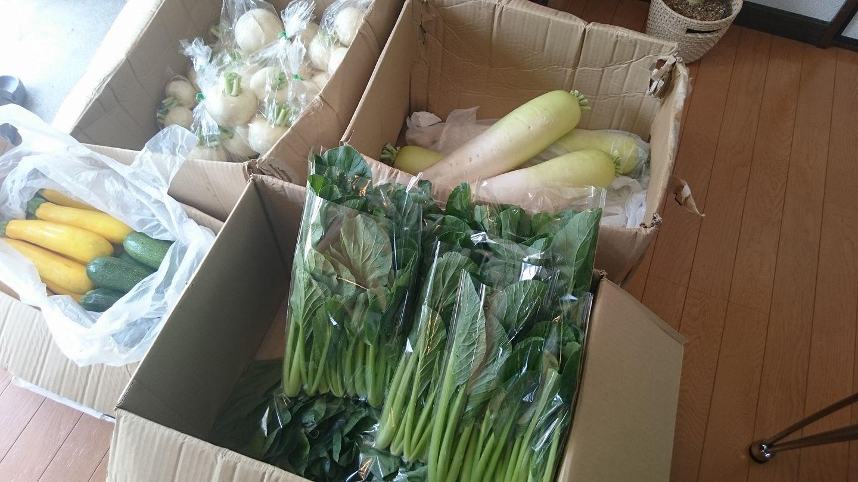野菜が届きました!